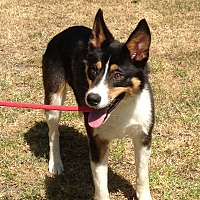 Adopt A Pet :: DINO - San Pedro, CA