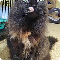 Adopt A Pet :: Joan Jett - Salisbury, MA