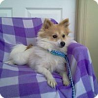 Adopt A Pet :: Molly - Erwin, TN