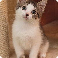 Adopt A Pet :: Dosi - Elkhorn, WI