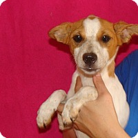 Adopt A Pet :: Nutmeg - Oviedo, FL