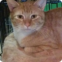 Adopt A Pet :: Leo - South Saint Paul, MN