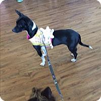 Adopt A Pet :: Linda - S. Pasedena, FL