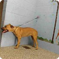 Adopt A Pet :: A496803 - San Bernardino, CA