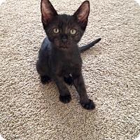 Adopt A Pet :: Ross - Temecula, CA