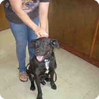 Adopt A Pet :: Donovan - Newnan City, GA