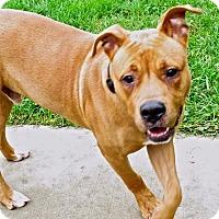 Adopt A Pet :: Zok - Troy, MI