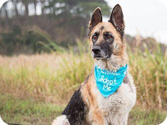 German Shepherd Dog Dog for adoption in Pacific Grove, California - Miss Jet