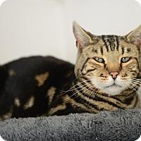 Adopt A Pet :: Mr Grayson - Gardnerville, NV