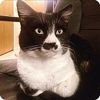 Adopt A Pet :: Harken - Vancouver, BC