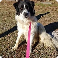 Adopt A Pet :: Freya - ON HOLD - NO MORE APPLICATIONS - Hewitt, NJ