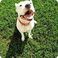 Adopt A Pet :: Peko - Dayton, OH