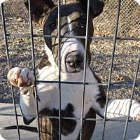 Adopt A Pet :: 46899 Emma - Zanesville, OH