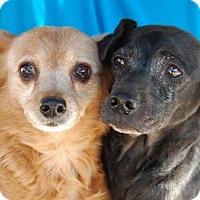 Adopt A Pet :: Faith - Las Vegas, NV