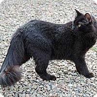 Adopt A Pet :: Coal - El Dorado Hills, CA