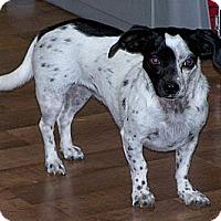 Adopt A Pet :: Paisley - San Angelo, TX