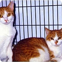 Adopt A Pet :: Buttercup and Honey - Medway, MA