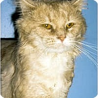 Adopt A Pet :: Bandit - Medway, MA