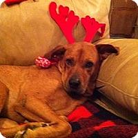 Adopt A Pet :: Penny - Orlando, FL