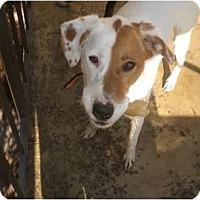 Adopt A Pet :: Nova - Irvine, CA
