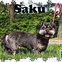 Adopt A Pet :: Saku - Fallston, MD