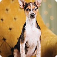 Adopt A Pet :: K.T - Portland, OR