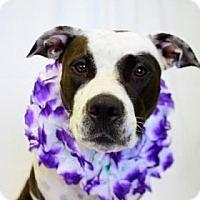 Adopt A Pet :: Peggy - Bradenton, FL
