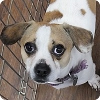Adopt A Pet :: Nemo - Memphis, TN