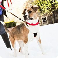 Adopt A Pet :: Cassie  (Has application) - Washington, DC