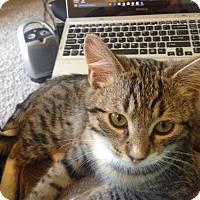 Adopt A Pet :: Spike - Los Angeles, CA