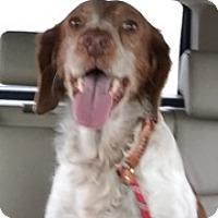 Adopt A Pet :: TX/JJ - Walton, KY
