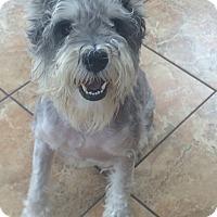 Adopt A Pet :: Rex - Oak Ridge, NJ
