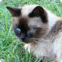 Adopt A Pet :: Ming - Gonzales, TX