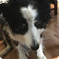 Adopt A Pet :: Birdie - Madison, WI