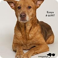 Adopt A Pet :: Kenya  (Foster) - Baton Rouge, LA