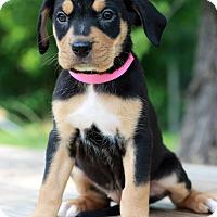 Adopt A Pet :: Gille - Waldorf, MD