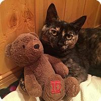 Adopt A Pet :: Sassy - Barrington, NJ