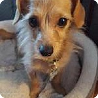 Adopt A Pet :: Lucy Jo - Atlanta, GA