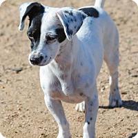 Adopt A Pet :: Pixie - Anaheim, CA