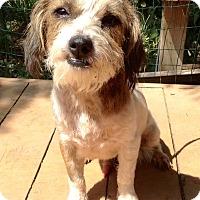 Adopt A Pet :: Opie - Santa Ana, CA