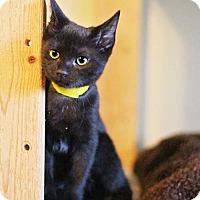 Adopt A Pet :: Tyson - Markham, ON