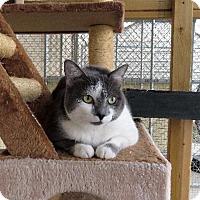 Adopt A Pet :: Artemis - Van Wert, OH