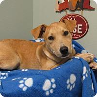 Adopt A Pet :: Tuff - Groton, MA