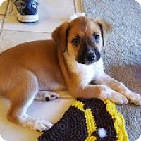 Adopt A Pet :: Milly - Pompano beach, FL