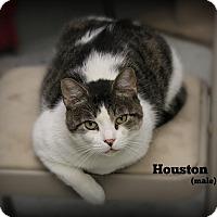 Adopt A Pet :: Houston - Glen Mills, PA