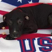 Adopt A Pet :: Rylie - Jacksonville, TX