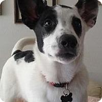 Adopt A Pet :: Genevive - Gilbert, AZ