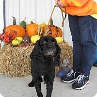 Adopt A Pet :: NICKS - Port Clinton, OH