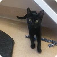 Adopt A Pet :: Hydro - Cumming, GA