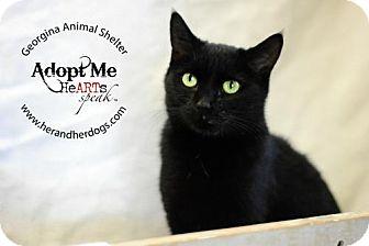 Domestic Shorthair Cat for adoption in Keswick, Ontario - Gypsy